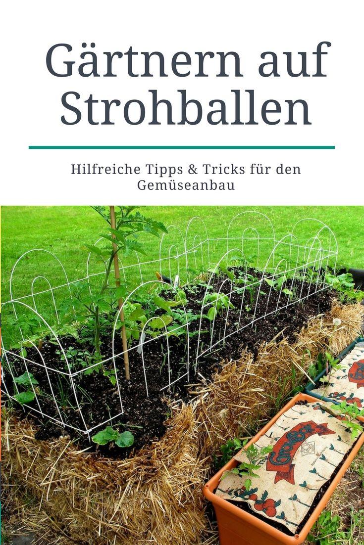 Gartnern Auf Strohballen Innovativ Gemuse Pflanzen Und Pflegen