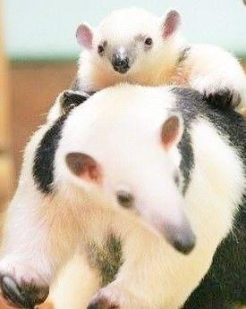 source : pinterest _  famille animal tamuanda