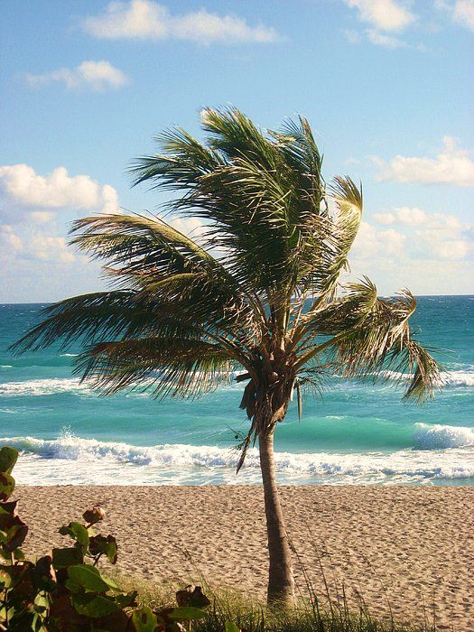 Jupiter, FL.  A windy day