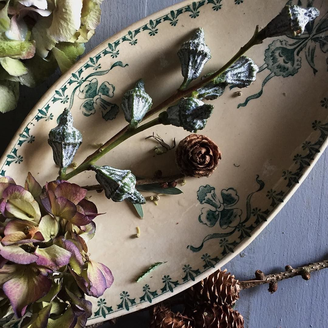 One should always have matching seedpods and crockery