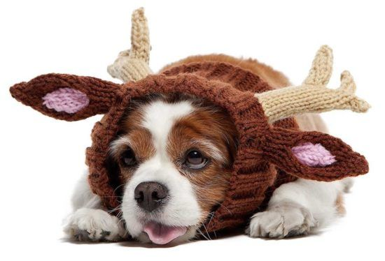 Crochet Dog Hat Pattern Free Image Collections Knitting Patterns