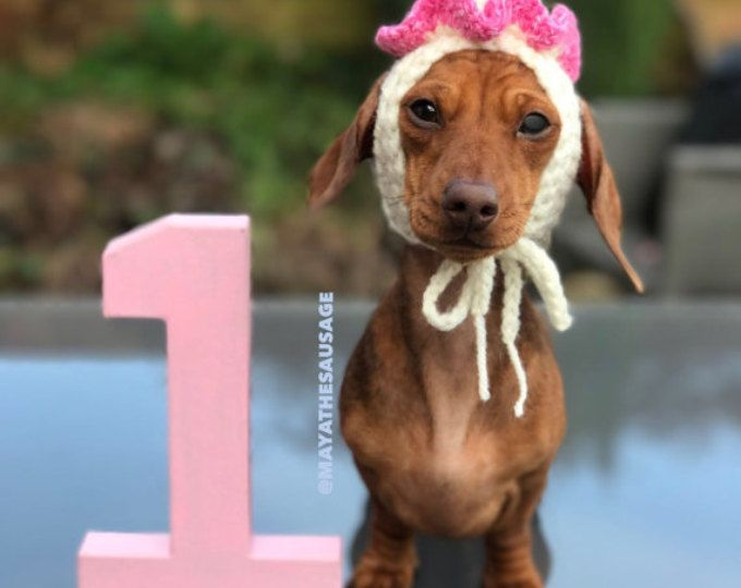 Birthday Dog Party Hat Snood Dachund Sausage Wiener Doxie