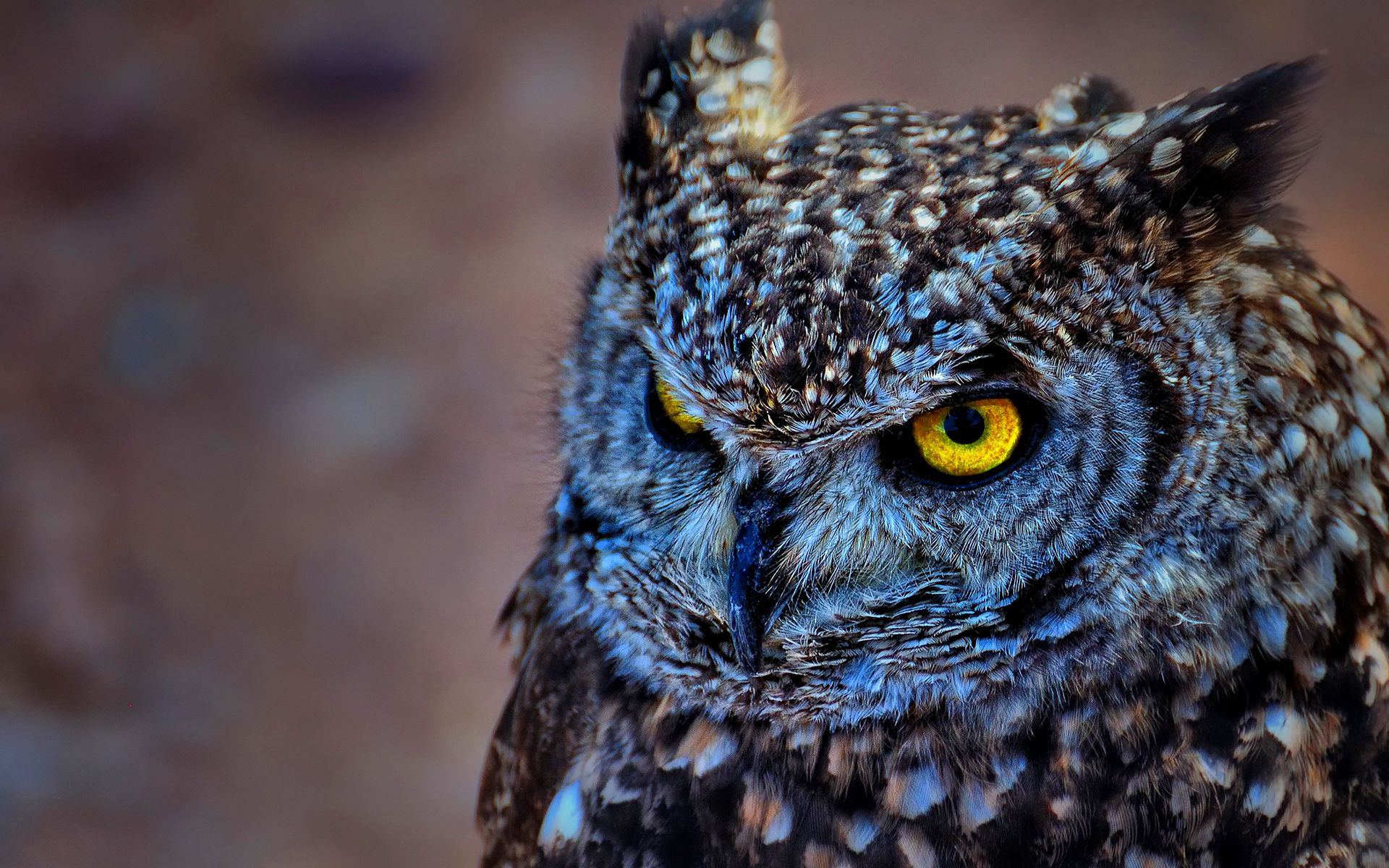 EAGLE OWL WALLPAPERS FREE Wallpapers & Background images