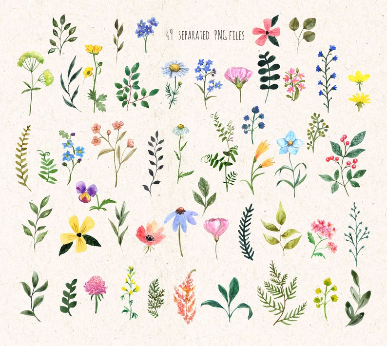 Watercolor Wildflower Clipart Hand Painted Colorful Watercolor Floral Elements Spring Summer Flower Clip Art Wildflower Png Botanical In 2021 Flower Clipart Clip Art Floral Watercolor