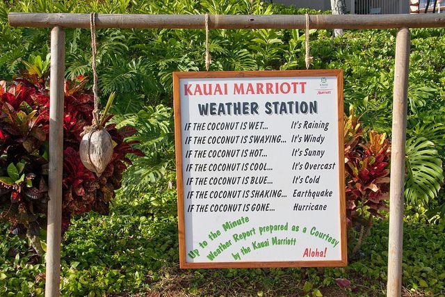 Coconut Weather Station - Hawaiian Humor | Hawaiian, Weather and Humor