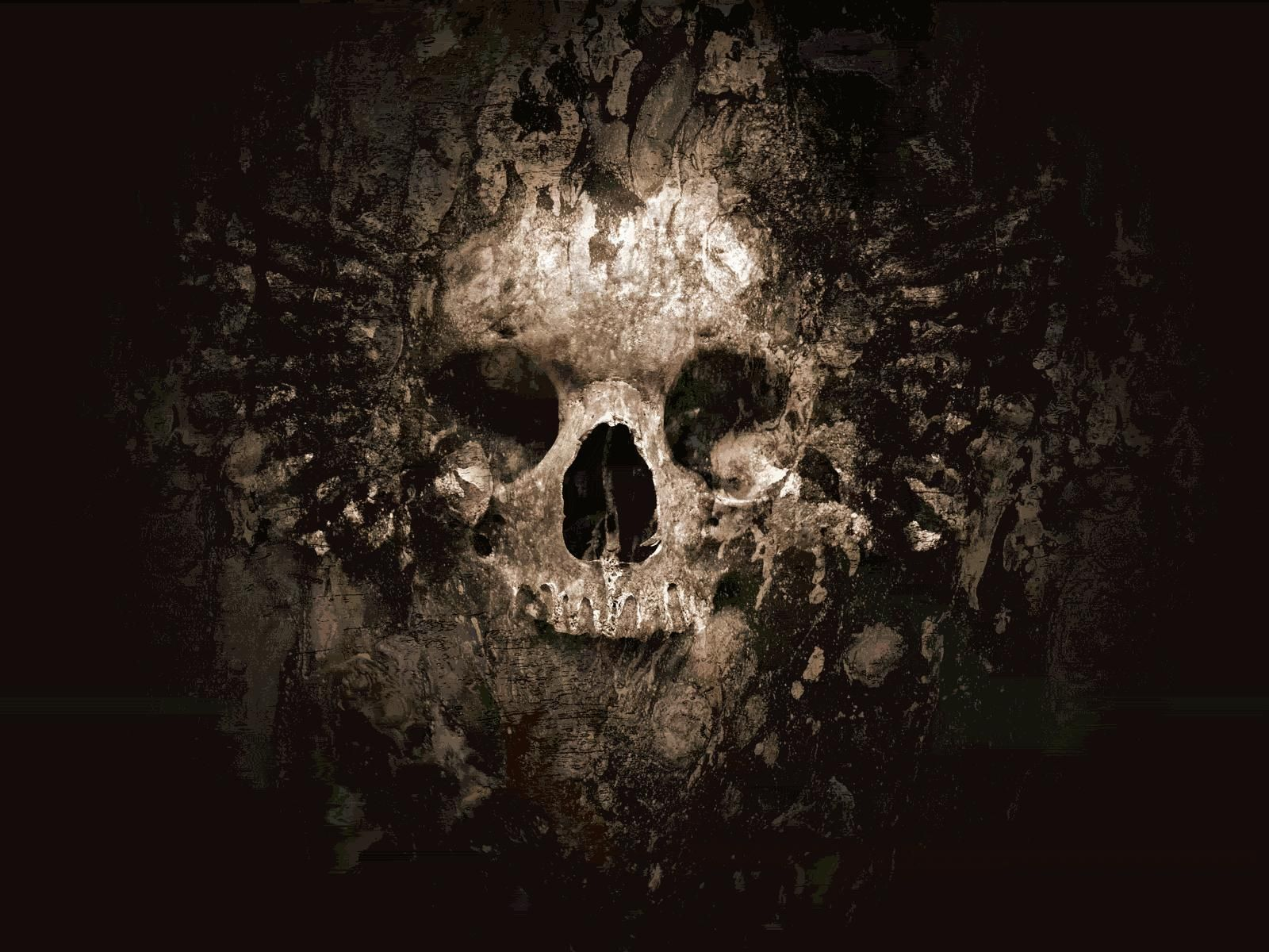 Cool Skull Pictures Skulls Skull Wallpaper