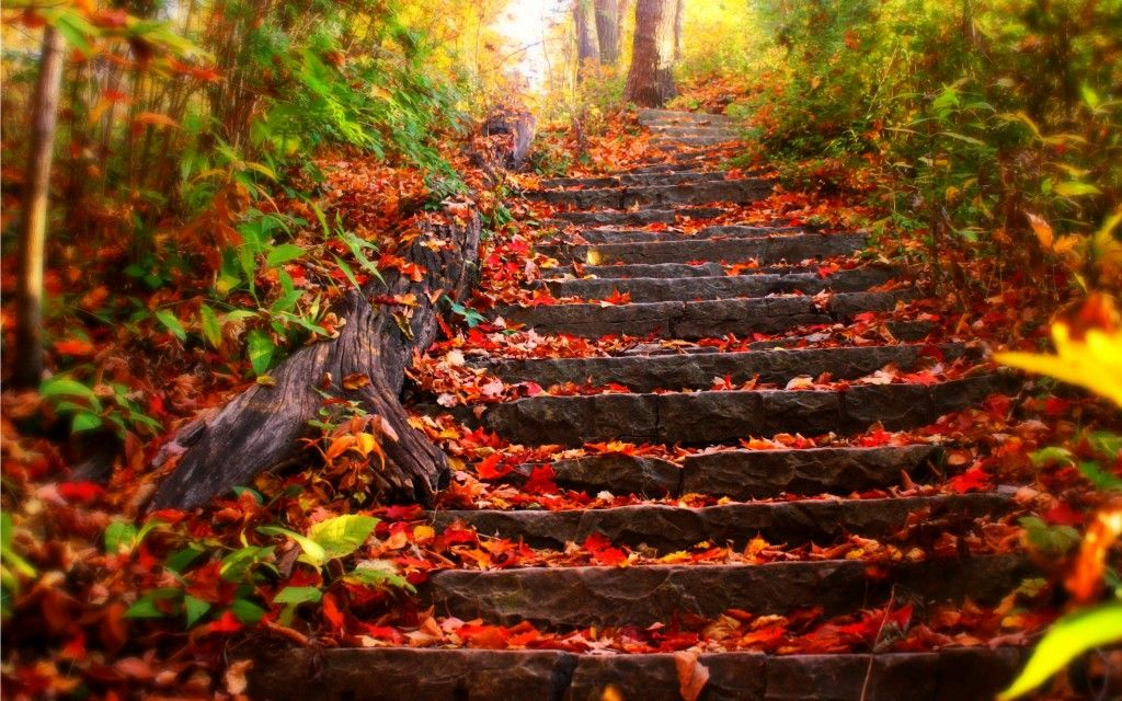 Fall Foliage Wallpaper Hd Wallpapers Os Autumn Leaves Wallpaper Autumn Landscape Desktop Wallpaper Fall