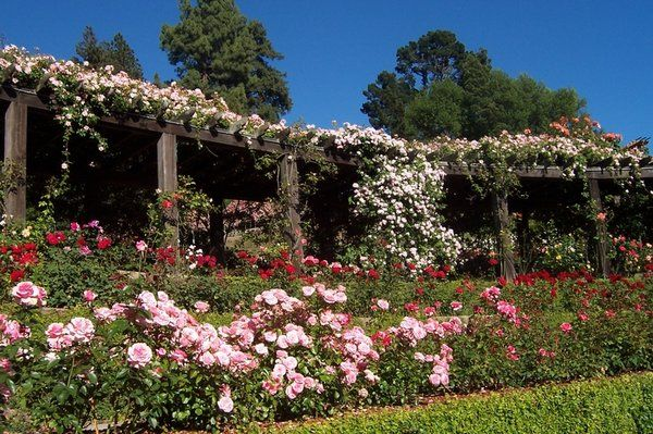 visit an outdoor garden i miss this berkeley rose garden sigh so much - Berkeley Rose Garden