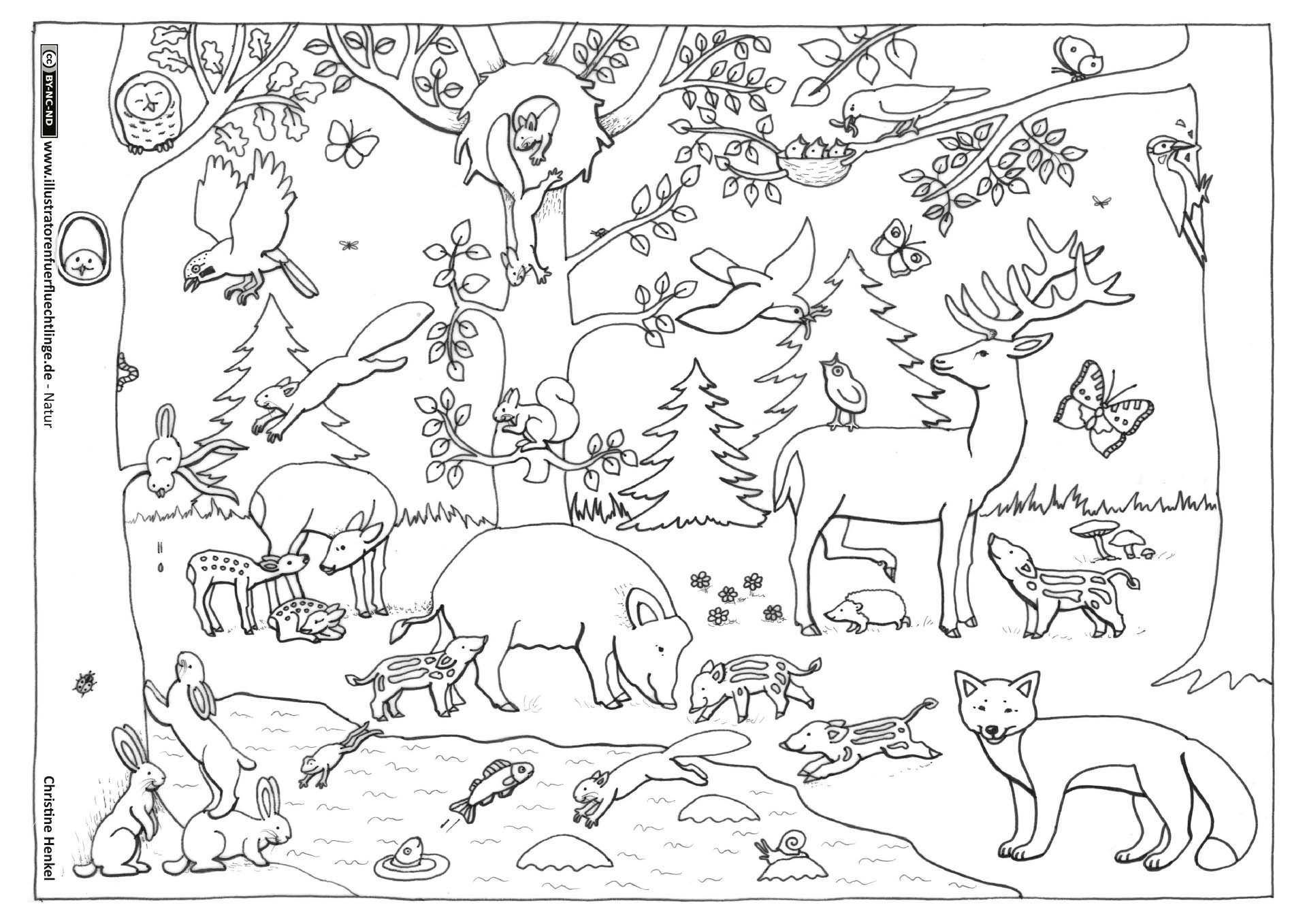Nature Forest Autumn Animals Coloring Page Kindergarten