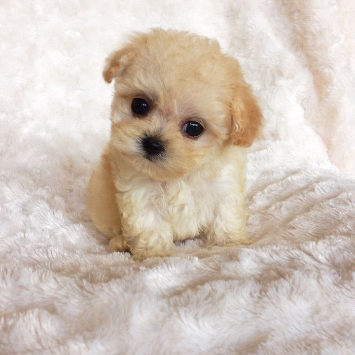 Top 10 Cutest Puppies Puppies, Cute puppies, Cute baby