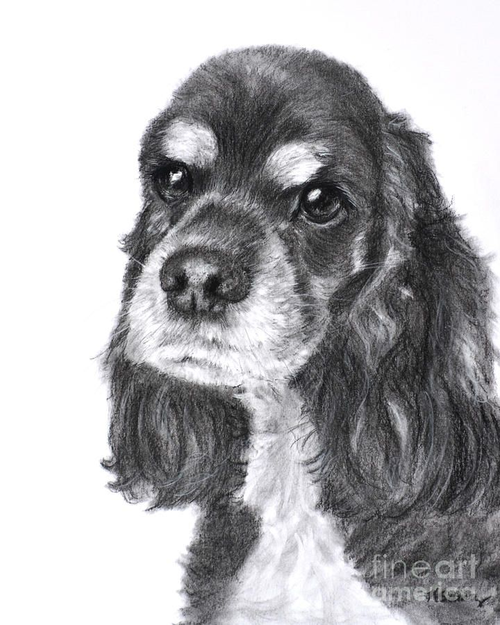 Kate Sumners Art Cocker Spaniel Black Cocker Spaniel Dog Art