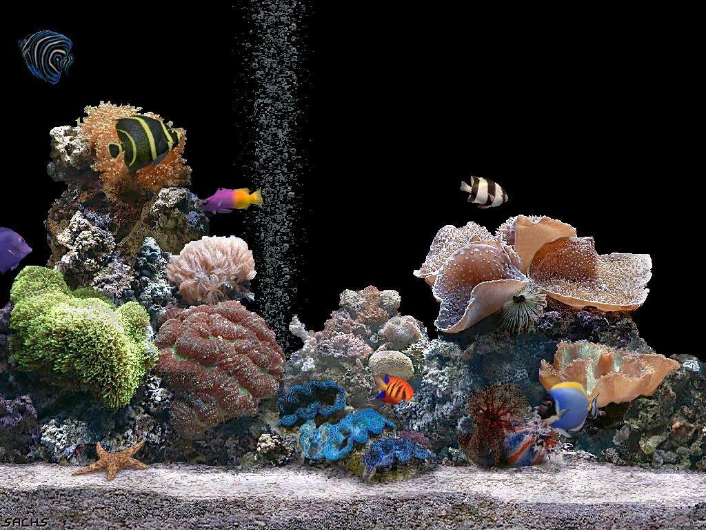 Fond D Ecran Gratuit Aquarium Qui Bouge En 2020 Fond Ecran Gratuit Aquarium Fond Ecran Nature