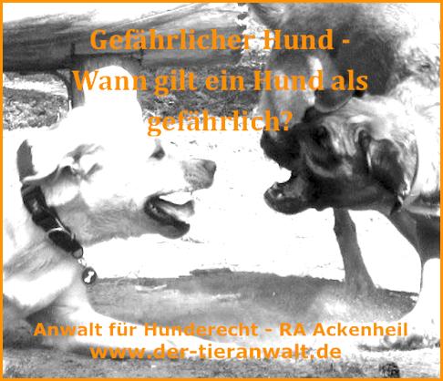 gefaehrlicher Hund Anwalt für Listenhunde RA Ackenheil - kostenlose Ersteinschätzung 06136 76 28 33 http://www.der-tieranwalt.de  http://www.tierrecht-anwalt.de