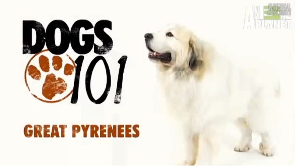 The Dogs 101 Program Is A Terrific Series Created By Animal Planet