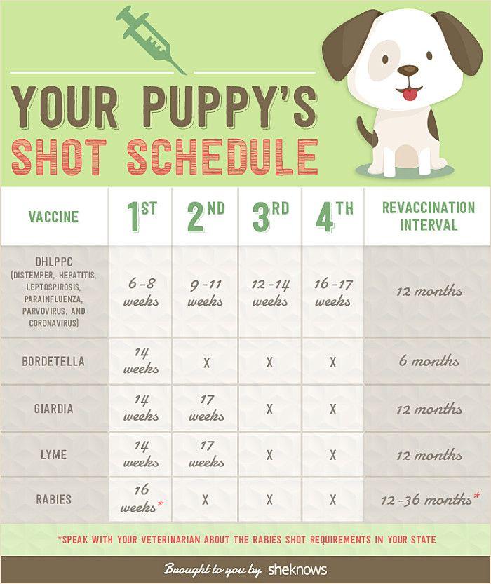 The Loyal Dobermans Dogs And Kids Dobermanlife Bluedoberman Dobermantraining Training Your Puppy Dog Training Tips Dog Care Tips