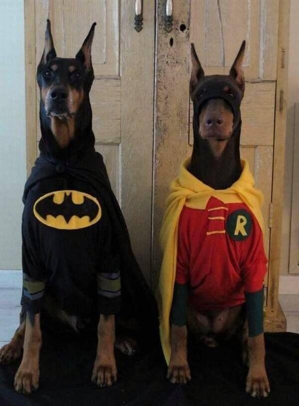 Batman And Robin Dog Costumes Pet Costumes Doberman Dogs