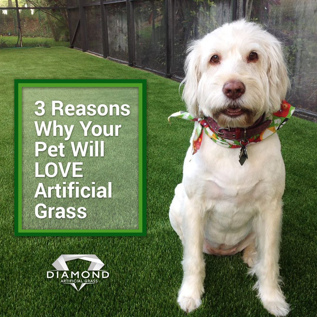 You Have Pets At Home If Your Answer Is Yes There Here Are 3 Reasons Why You Absolutely Need To Install A Artificial Grass Installation Artificial Grass Pets