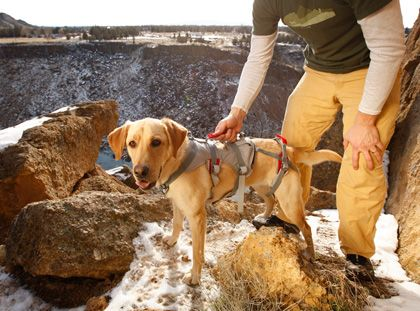 Doubleback Full Body Dog Harness Dog Harness German