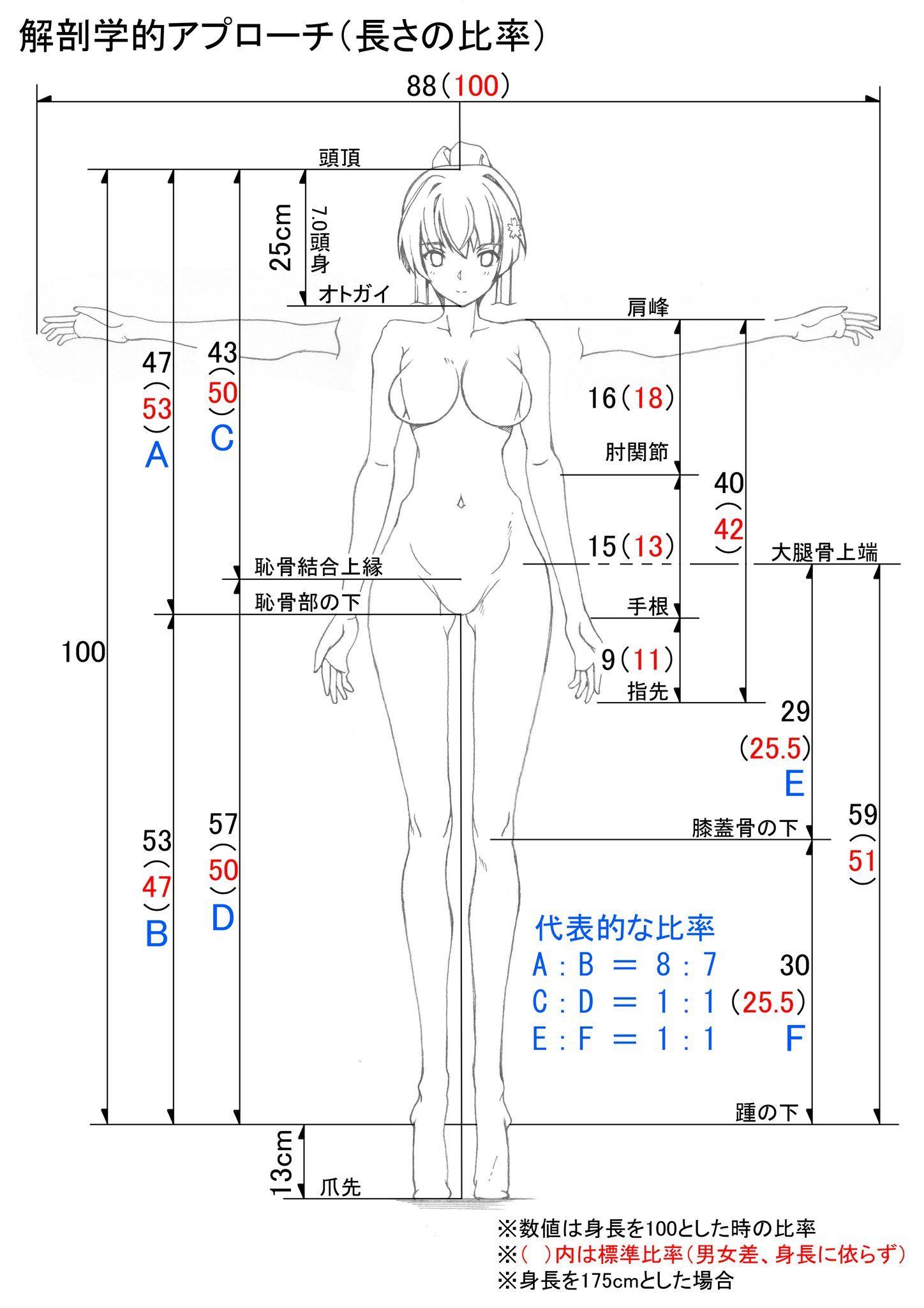 ねんち@3日目ソ42a (@sakkamoo) | Twitter | anatomia | Pinterest ...
