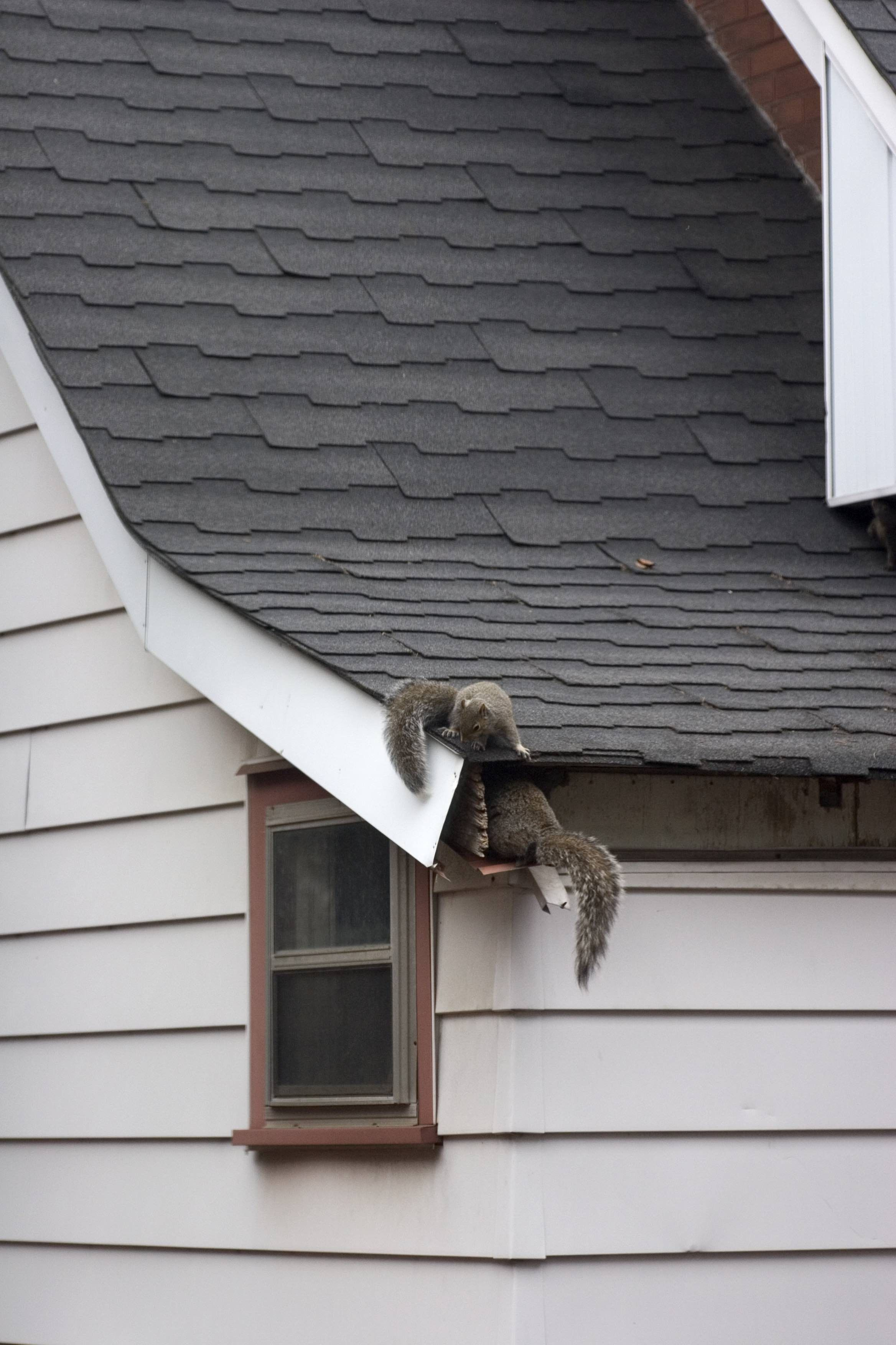 Pin by At Ease Home / Environmental Inspections on