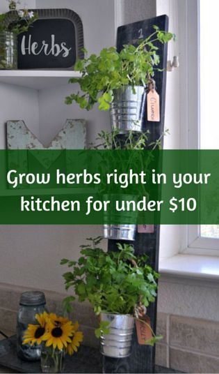 Grow Herbs Right In Your Kitchen For Under 10 Growing Herbs