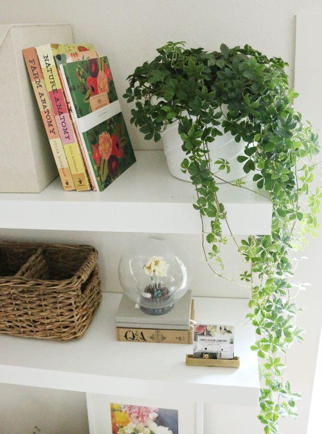 Plantas Colgantes Para Interior Estanteria Pinterest Colgantes - Plantas-colgantes-de-interior