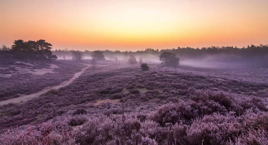 VIDEO A #timelapse journey through Dutch nature  Watch it now: