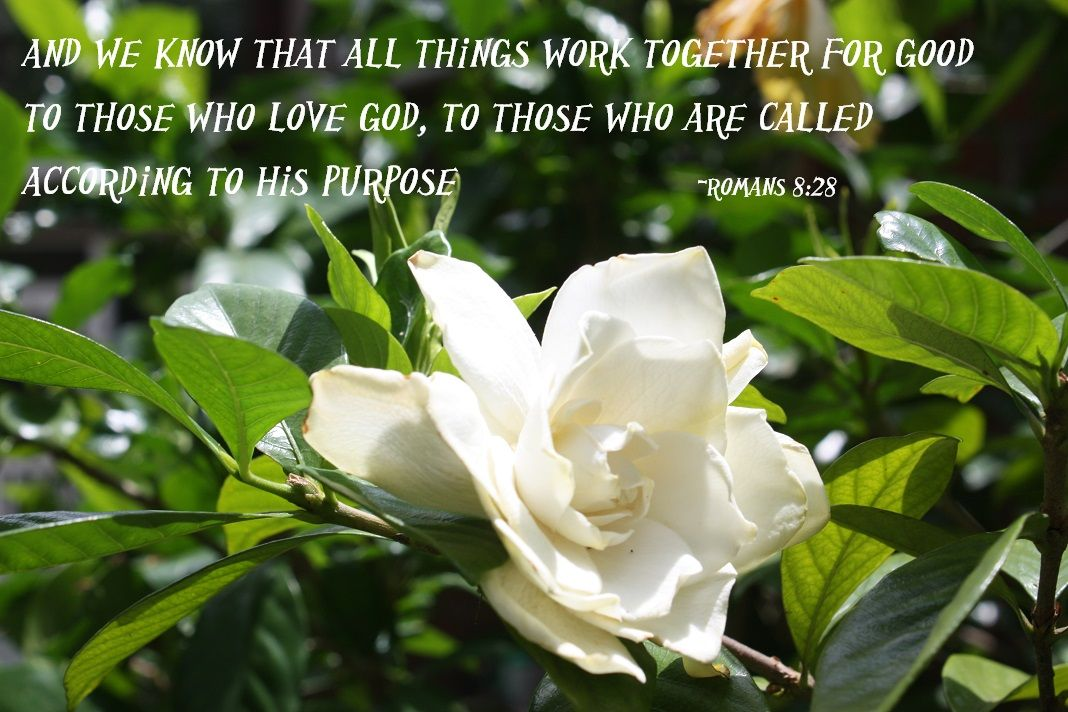 Wonderful Scripture Beautiful Gardenia S With Images All