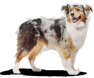 Pet Supplies Pet Food And Pet Products Petco Pet Supplies Food Animals Online Pet Supplies