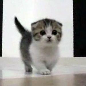 cat whisperer meme