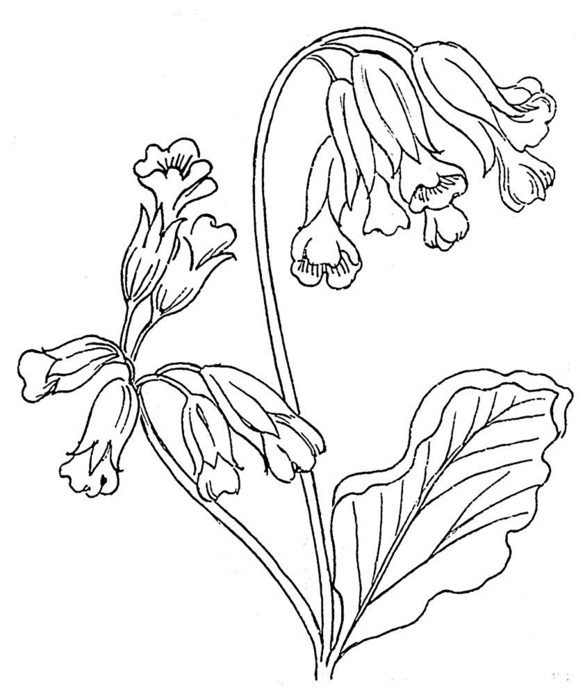 картинки раскраски про растения первый