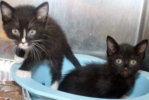 Urgent Beyonce Jay Z Time Has Run Out For These Beauties At High Kill Sc Shelter No Share On Facebook Pauvre