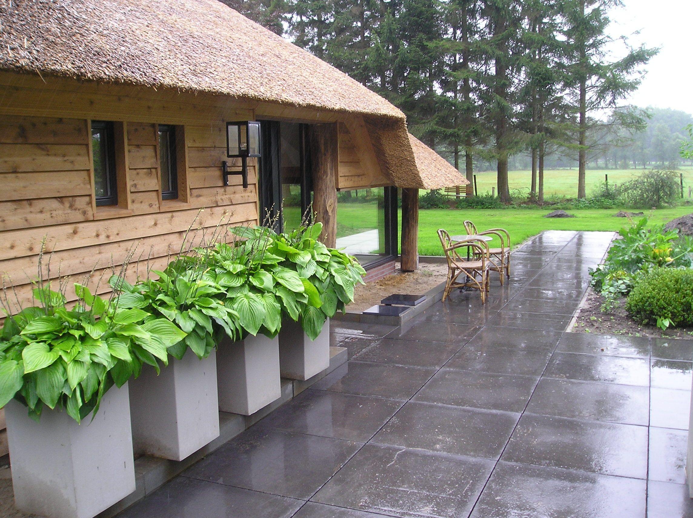 Mooie betonnen bakken met hosta garden pinterest for Mooie voortuinen foto s