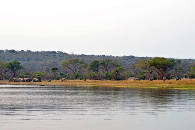 Elefanten auf der Inangu-Halbinsel - Elephants on Inangu Peninsula
