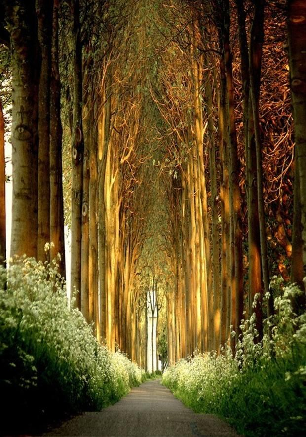 driving down a road and the trees make it look like a tunnel