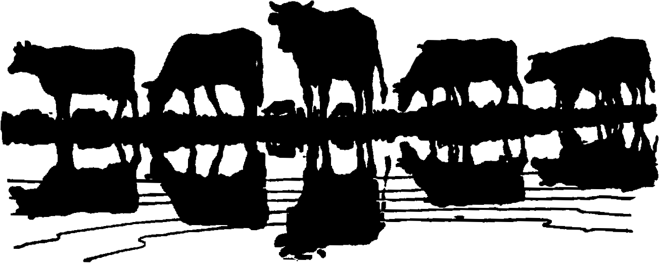 Cattle Drive Clipart Show Cattle Clipart Cattle Herd ...