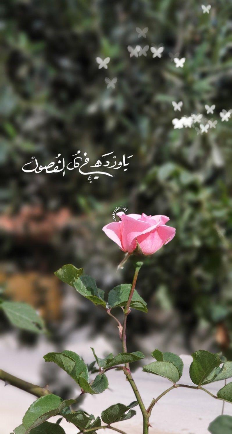 يا وردة في كل الفصول Cute Cartoon Images Sky Photography Nature Good Morning Photos
