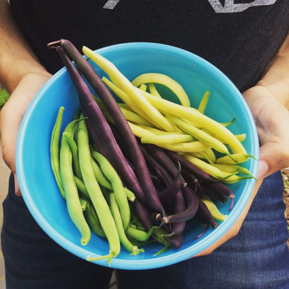 Urban Vegetable Gardening For Beginners: Planting Your First Garden? Here's 10 Of The Easiest And