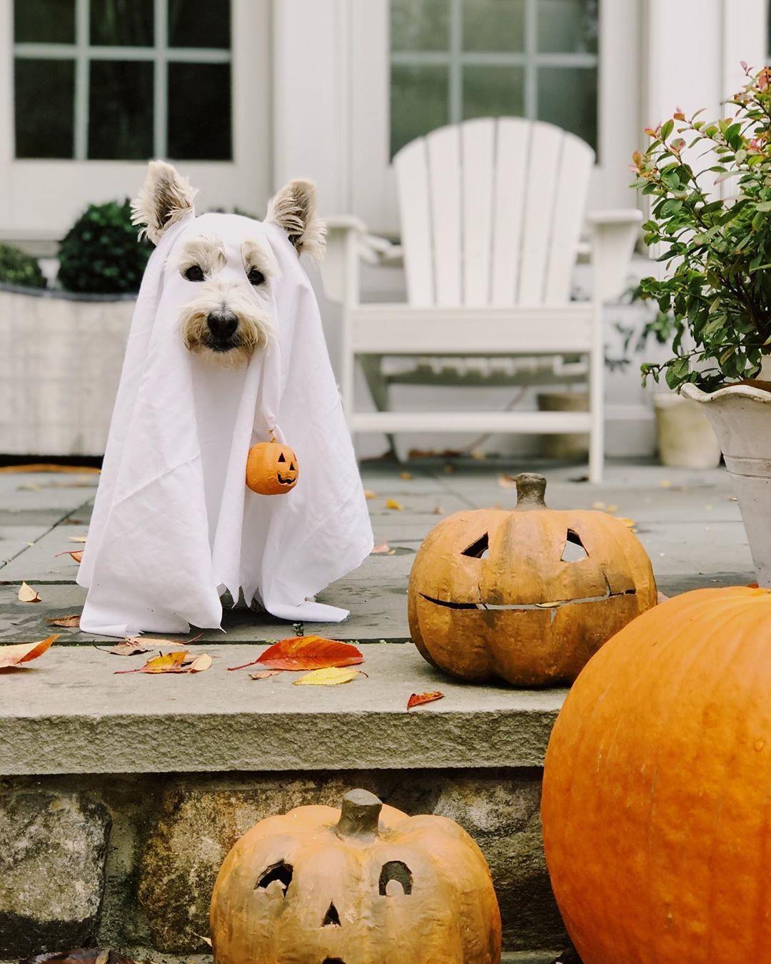"""Ellen 2020 Halloween Ellen on Instagram: """"Trick or Treat!!! 🎃👻 Scotty is very excited"""