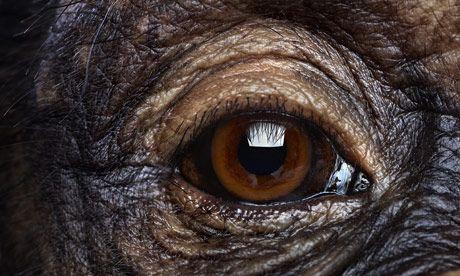 Eye spy can you identify an animal by its eye quiz