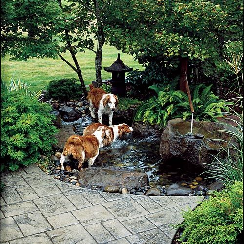 8 Backyard Ideas To Delight Your Dog: I Will ALWAYS Have Dogs! They Are Awesome And Having A Dog