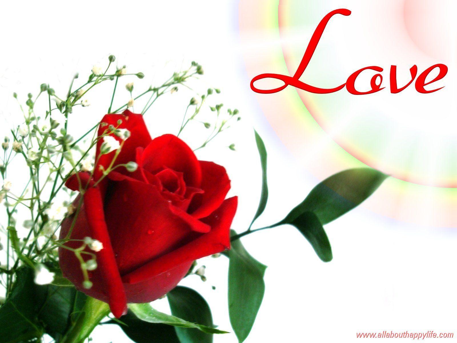 red flower wallpaper love Red flower wallpaper, Rose