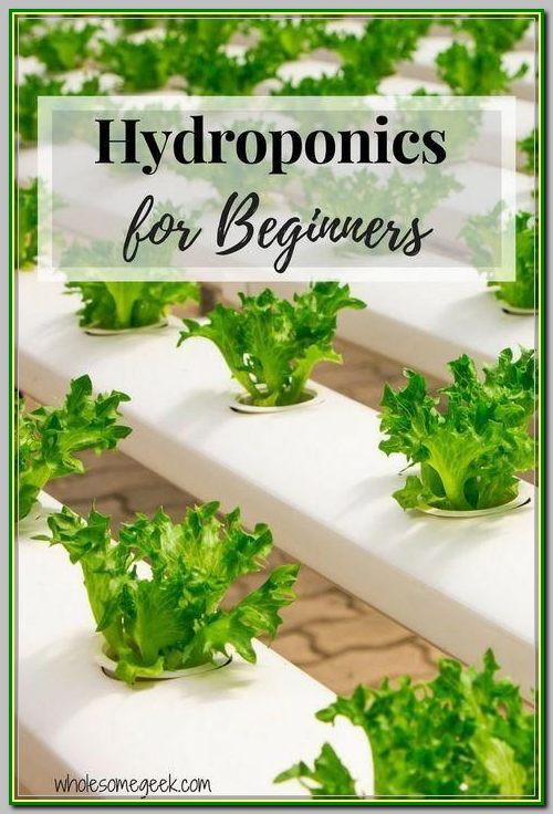 Organic Gardening Tips That Can Help You Out This is needed so that you will protect your plants from getting any diseases *** You can find out more information at the link of the image.