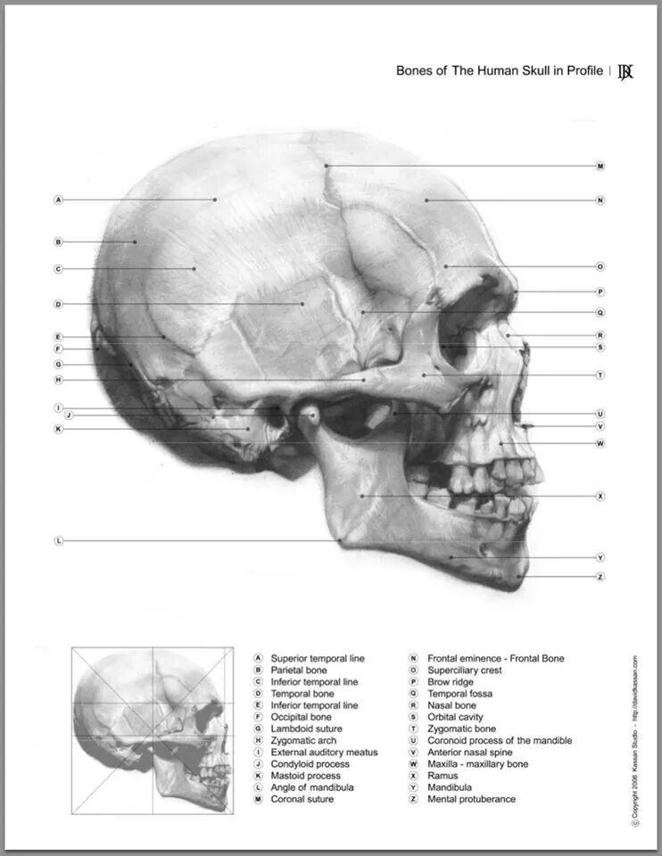 Schön Mundhöhlenanatomie Ppt Fotos - Anatomie Ideen - finotti.info