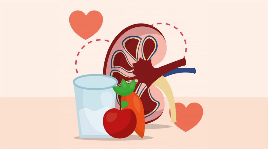 kidneys healthy kidney health maintaining rules recipes