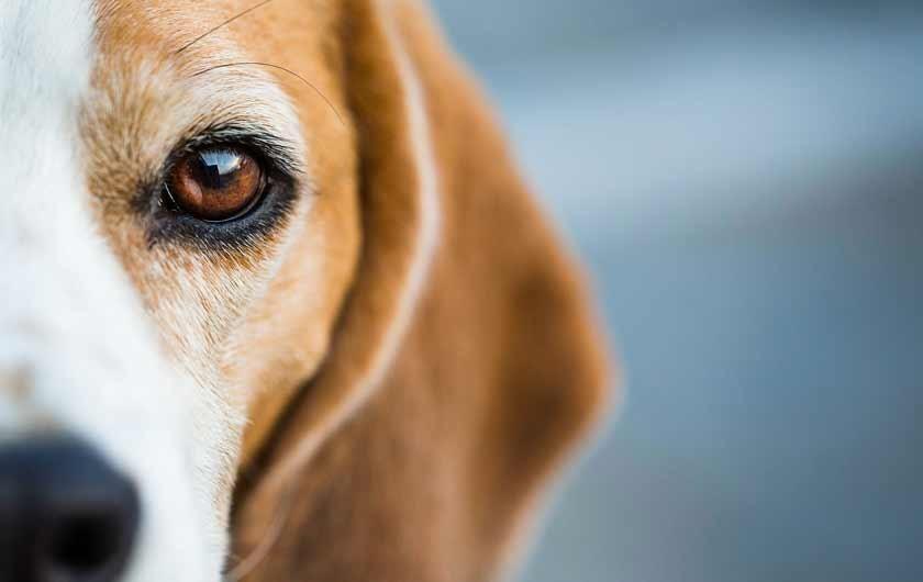 SHOP DOG FOOD Food animals, Dog food recipes, Healthy