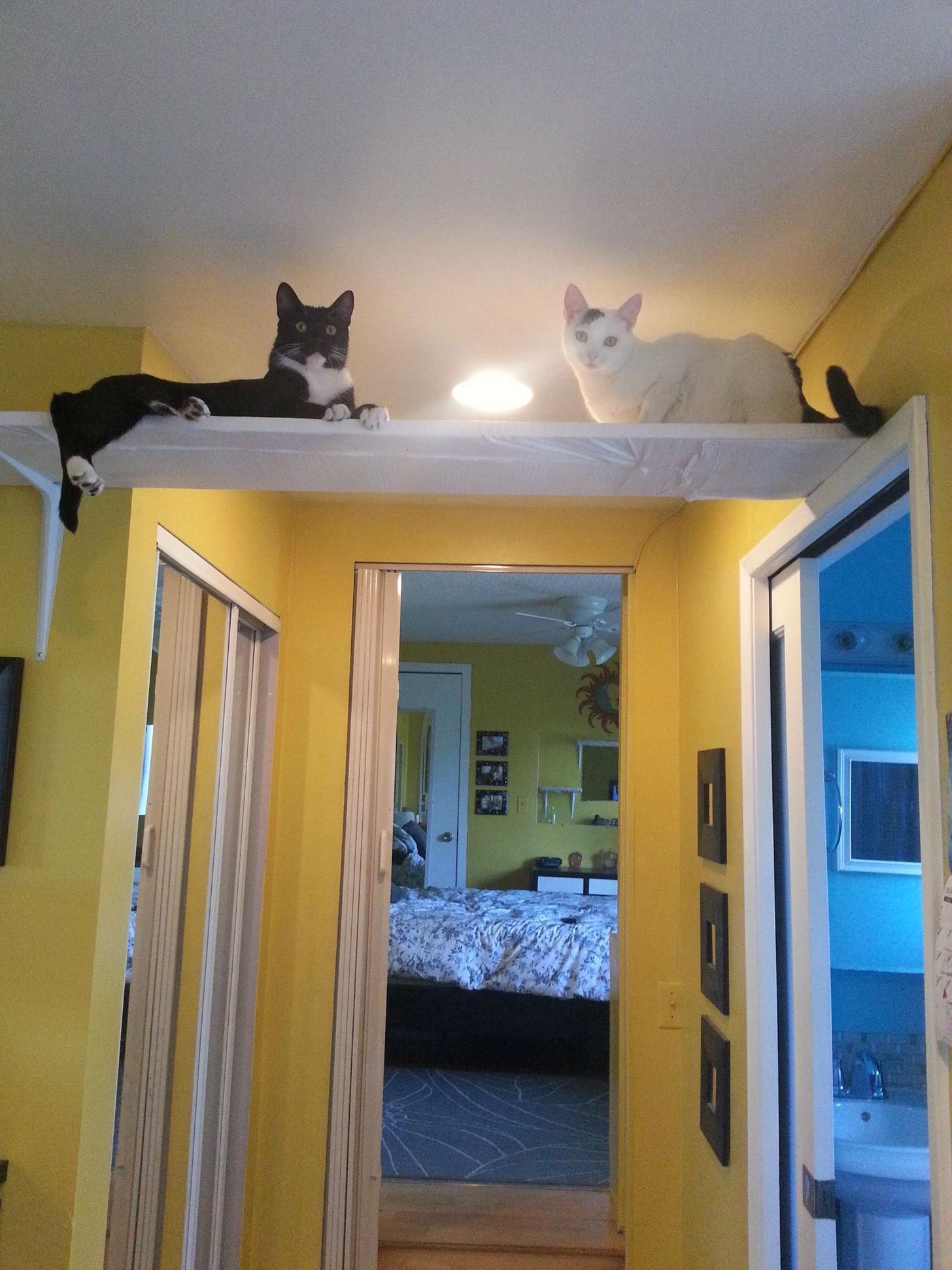 Cat shelf cat shelves cat furniture diy cats diy projects