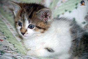 Leschats Fond D Ecran Chat Petit Felin Chat Mignon