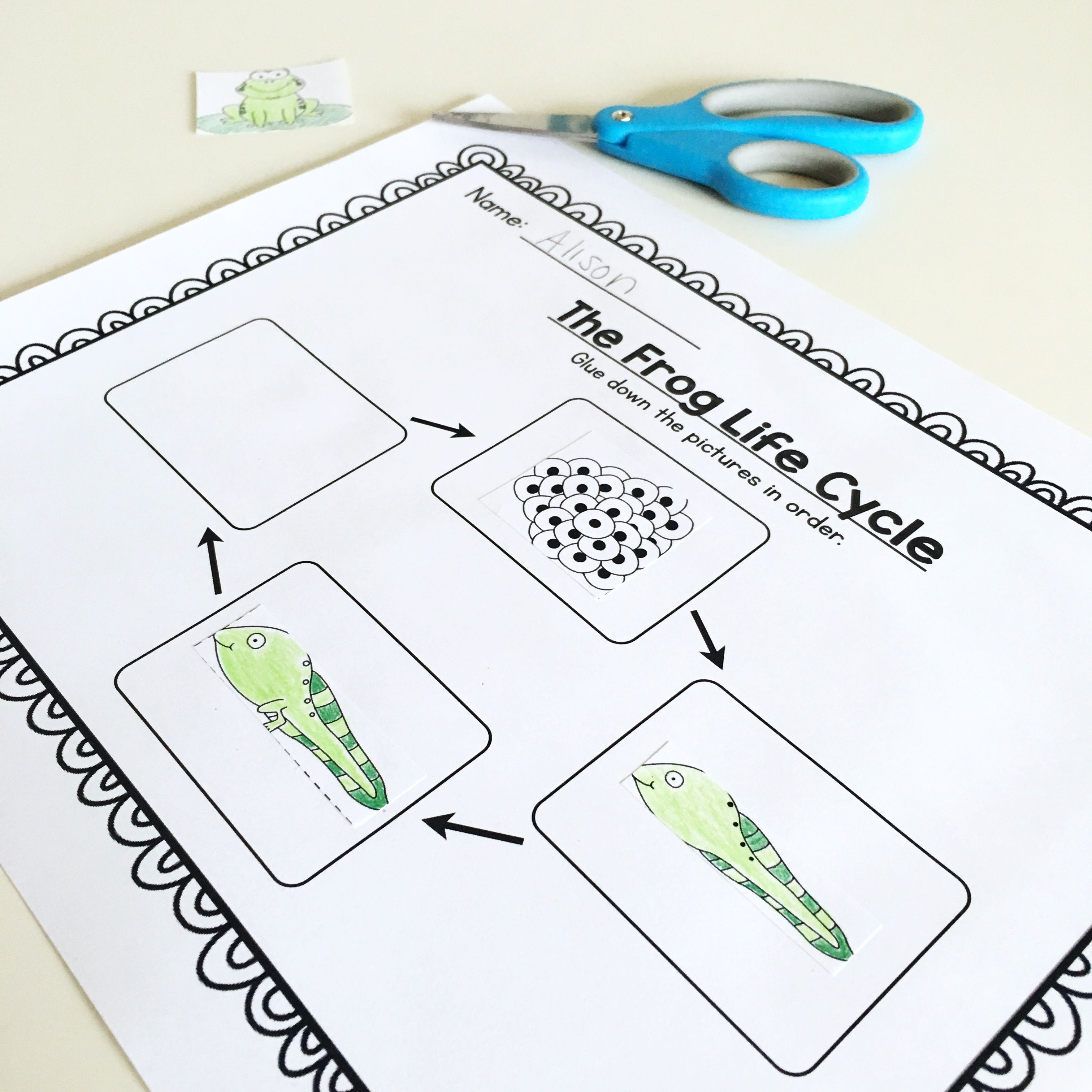 Frog Life Cycle Unit For Prek Kindergarten Or First