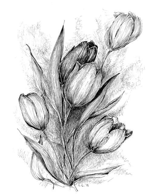 Tulip Flower Drawing Floral Original Art Black White Tulip Flower Drawing Tulips Art Flower Sketches